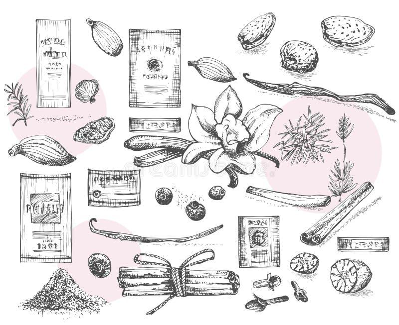 Set ręki rysować wino etykietki i Bożenarodzeniowy zim pikantność wzór używać w robić deserach, gorący rozmyślający wino, domowej royalty ilustracja