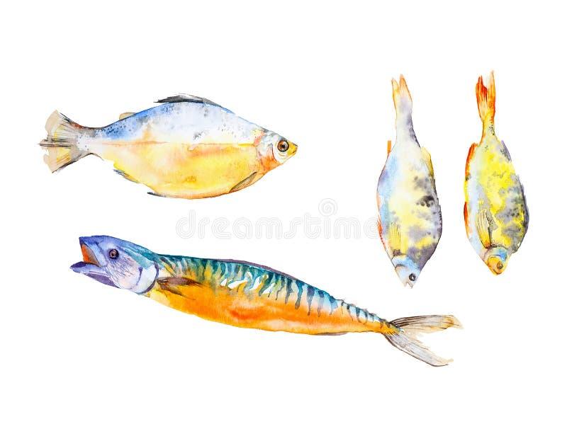 Set r??ni typy ryba Akwareli ilustracja odizolowywaj?ca na bia?ym tle royalty ilustracja
