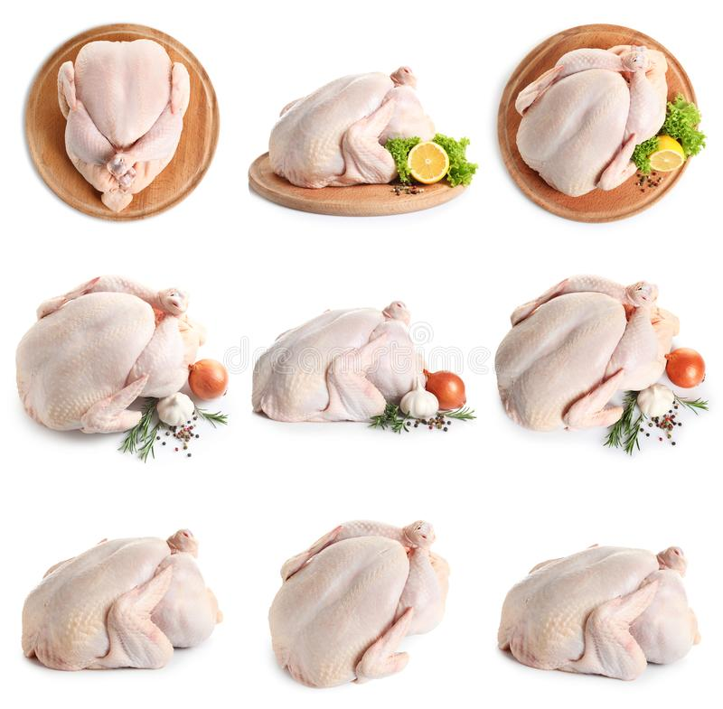 Set of raw turkey on white stock photo
