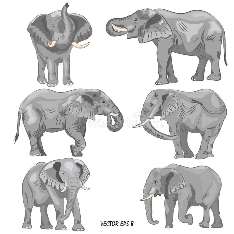 A set of realistic african elephants royalty free illustration