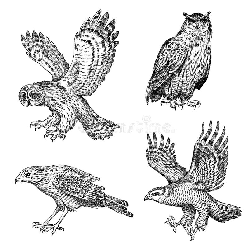 Set of realistic birds. Owl and eagle. Hand drawn vector sketch in engraved graphic style. royalty free illustration