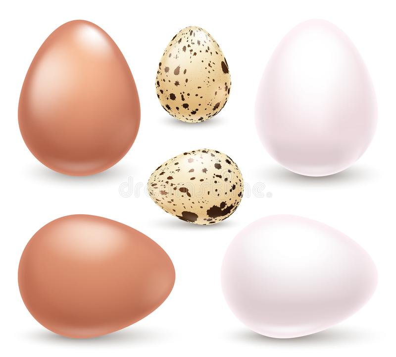 Set of realistic eggs on white background. Easter collection. Vector illustration. stock illustration