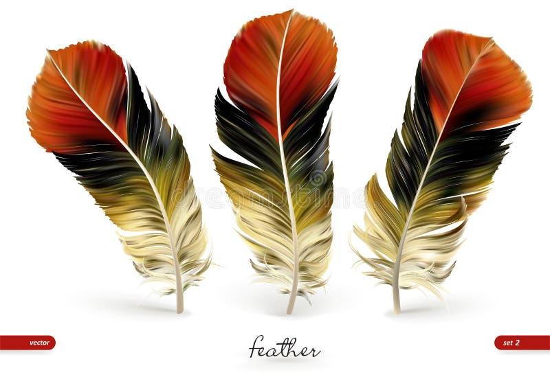 Set of realistic feathers - vector illustration. Isolated on white background stock illustration