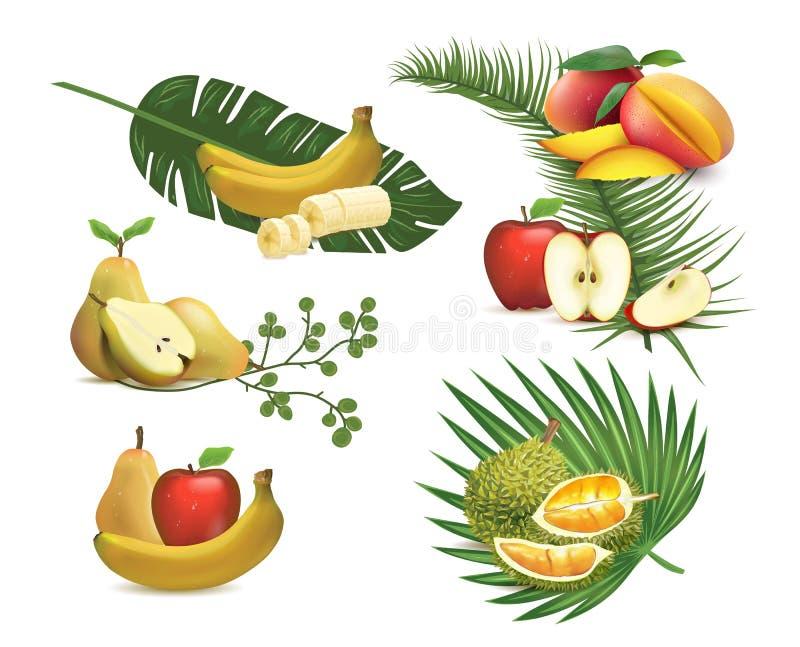 Set of realistic fruits, illustration of tropical foliage. stock image