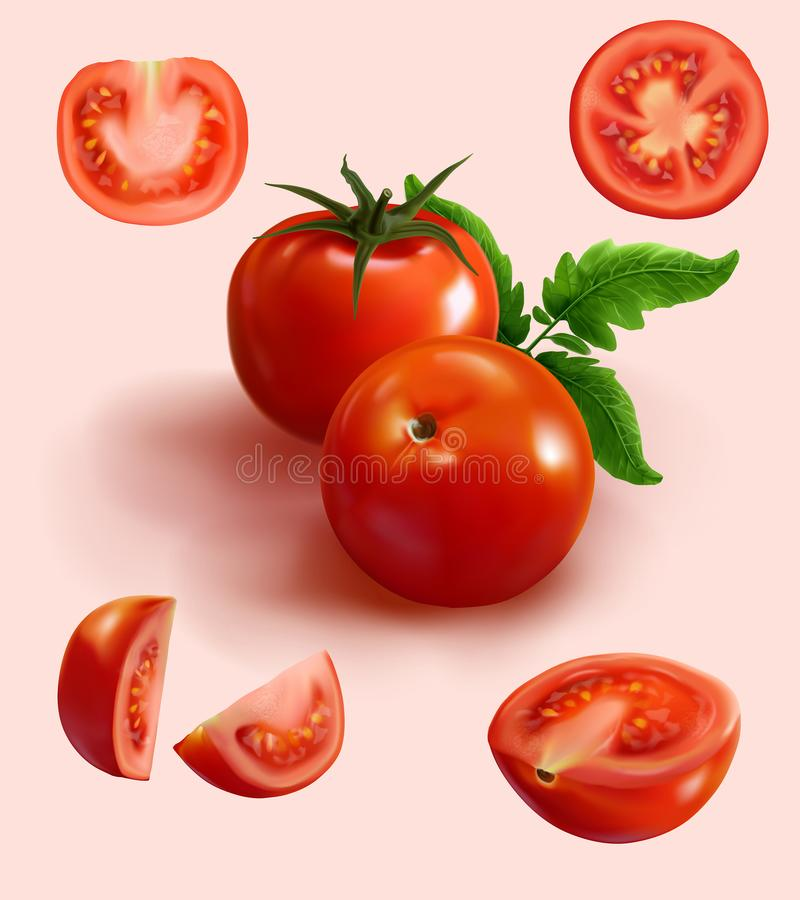 Realistic red tomato in various cut. A set of realistic illustration ripe tomato in various cuts such as cut in half,cut in piece,slices,cross cut and tomato vector illustration