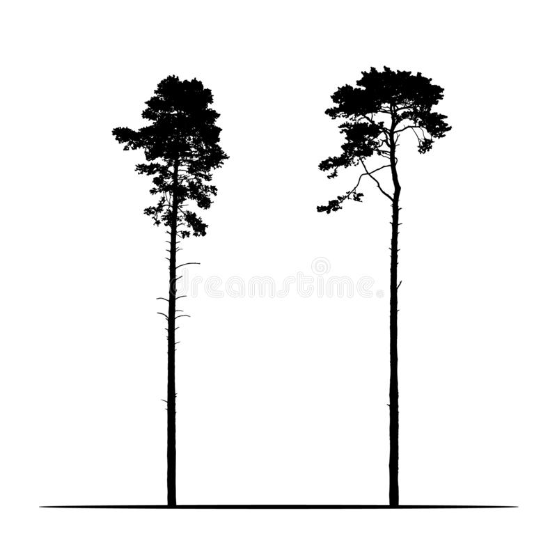 Set Realistic illustration of two tall coniferous pine trees. Isolated on white background, vector royalty free illustration