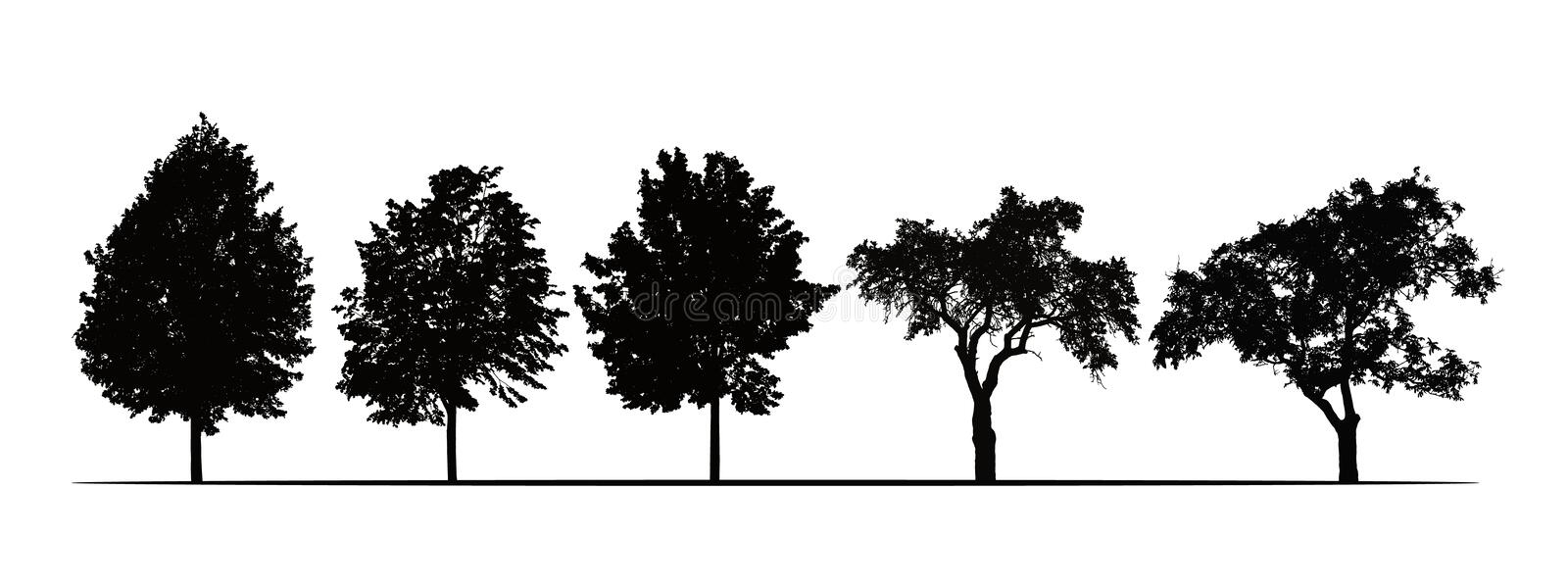 Set realistic illustrations of silhouettes of fruit trees - linden, apple and plum - isolated on white background, vector stock illustration