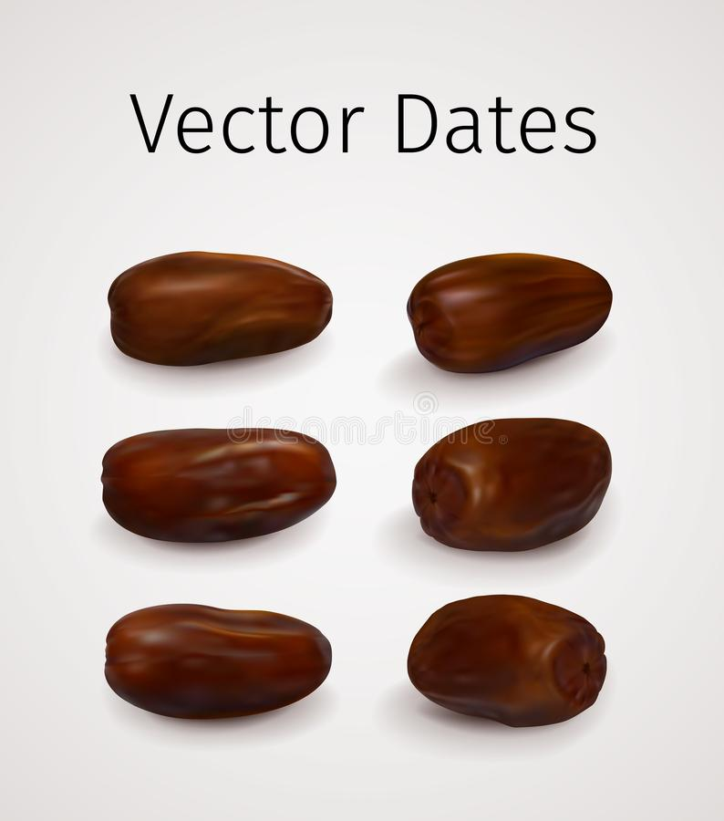 Set of Realistic Vector Dates Fruit. Isolated on white background. Natural Oriental Sweet Dried Fruit vector illustration
