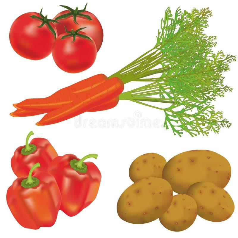 Set of realistic vegetables stock illustration