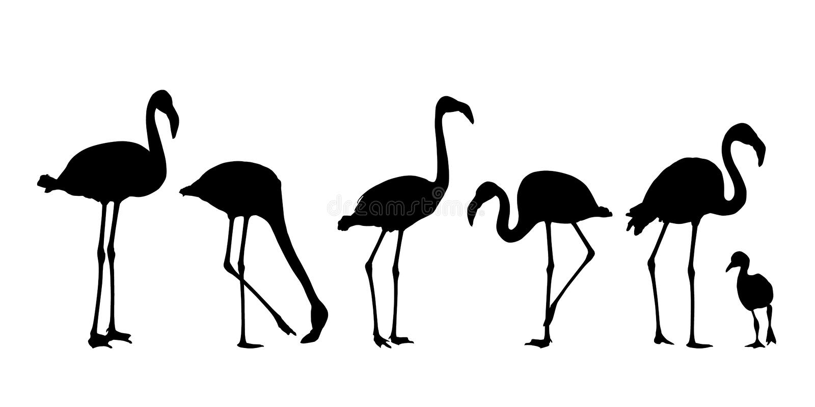 Set of realistic water bird silhouettes of flamingo, isolated on white background royalty free illustration
