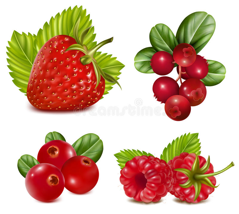 Set of red berries with leaves.