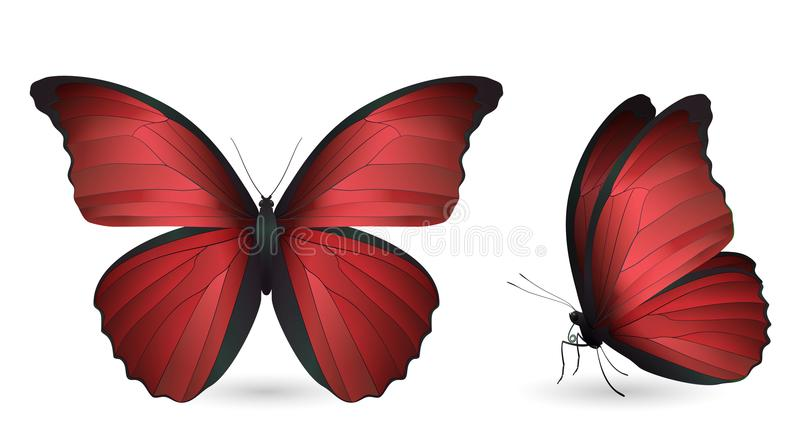 Download Set Of Butterflies Isolated On White Background Stock Vector - Illustration of group, free: 108834757