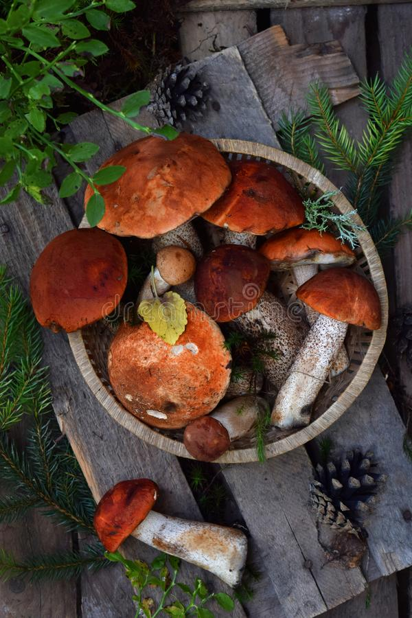 Set of red cap boletus in bowl on wooden background. Brown wild mushrooms. Edible fungus Leccinum Aurantiacum collected in forest. stock image
