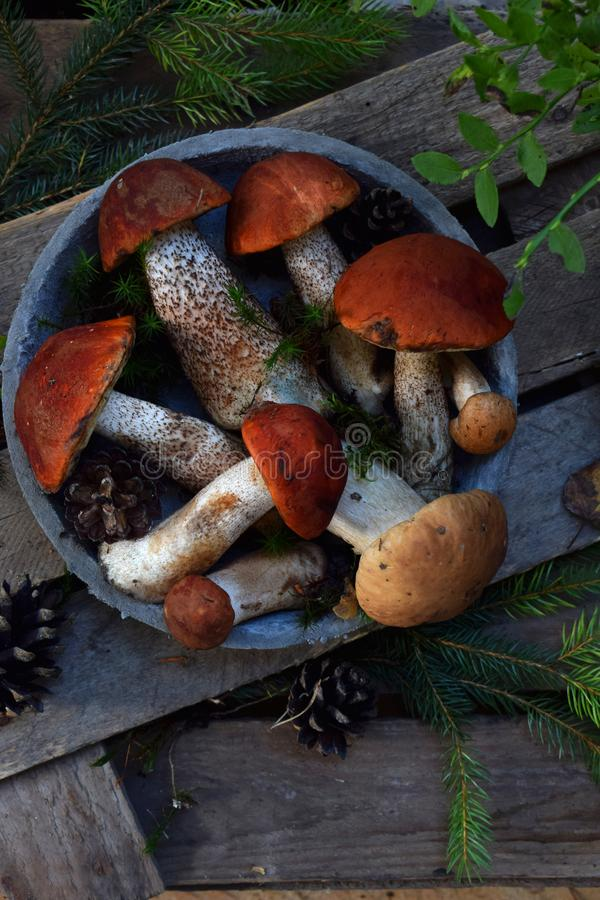 Set of red cap boletus in bowl on wooden background. Brown wild mushrooms. Edible fungus Leccinum Aurantiacum collected in forest. Set of red cap boletus in royalty free stock images