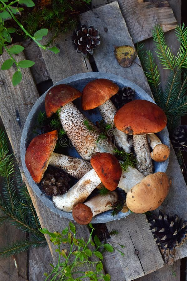 Set of red cap boletus in bowl on wooden background. Brown wild mushrooms. Edible fungus Leccinum Aurantiacum collected in forest. Set of red cap boletus in bowl royalty free stock photos