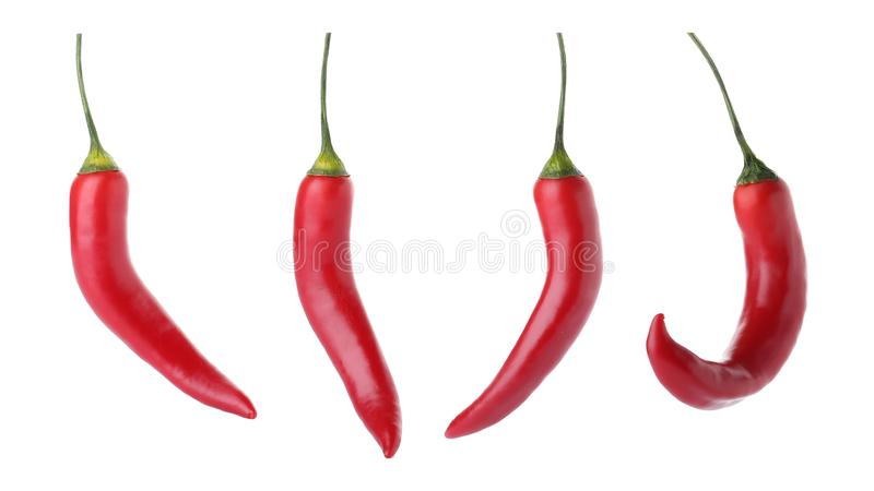 Set of red chili peppers royalty free stock photo
