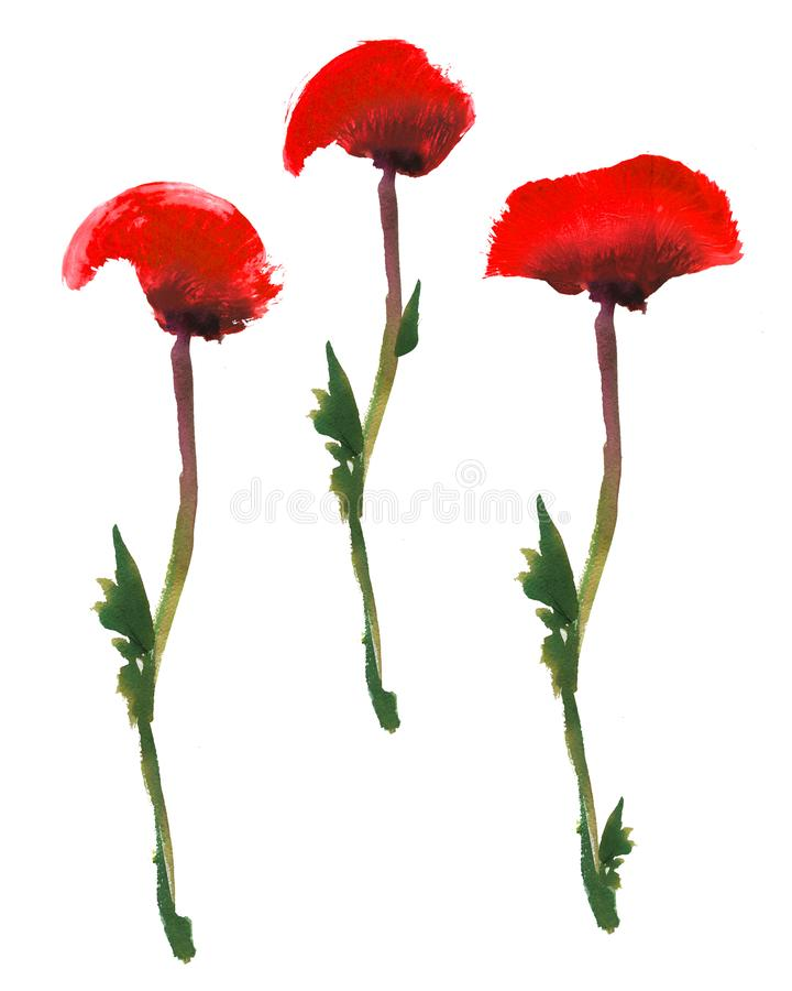 Set of red poppy flower on a green stem. Watercolor and gouache drawing isolated on white background royalty free illustration