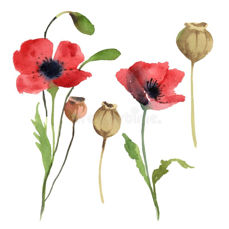 Set of red poppy flowers, leaves and poppy head stock illustration
