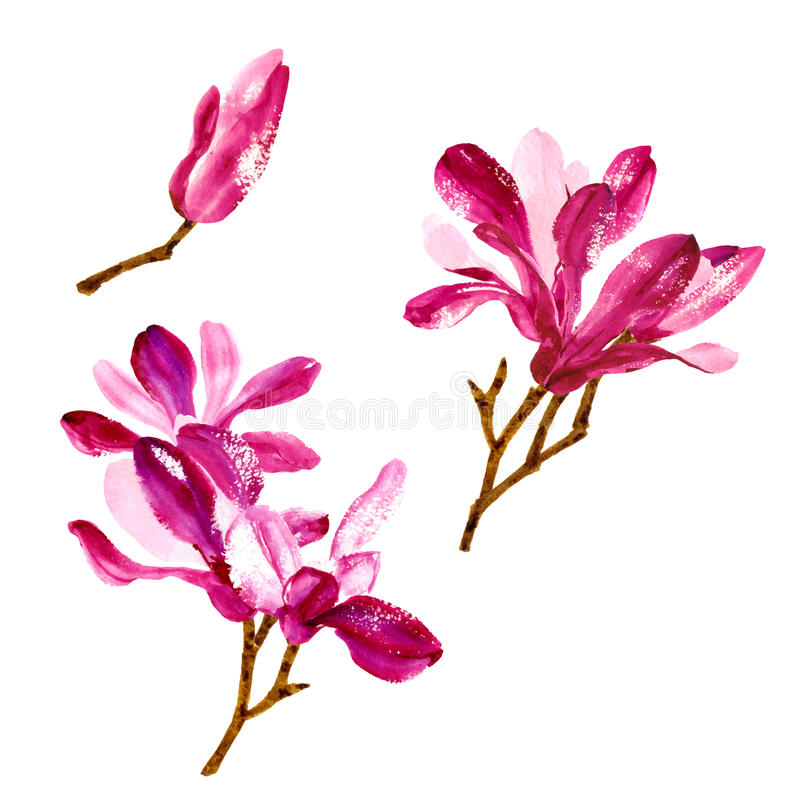 Set of red watercolor magnolia flowers stock illustration