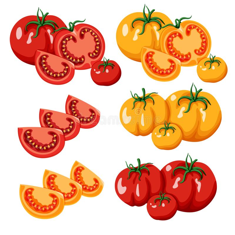 Set of red and yellow tomatoes. Cartoon illustration. Set of groups of ripe red and yellow tomatoes on a white background. Whole tomatoes, halves and slices of vector illustration