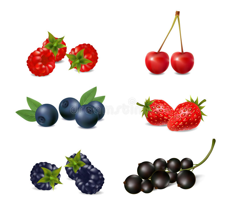 Set of ripe berries on a white background vector illustration