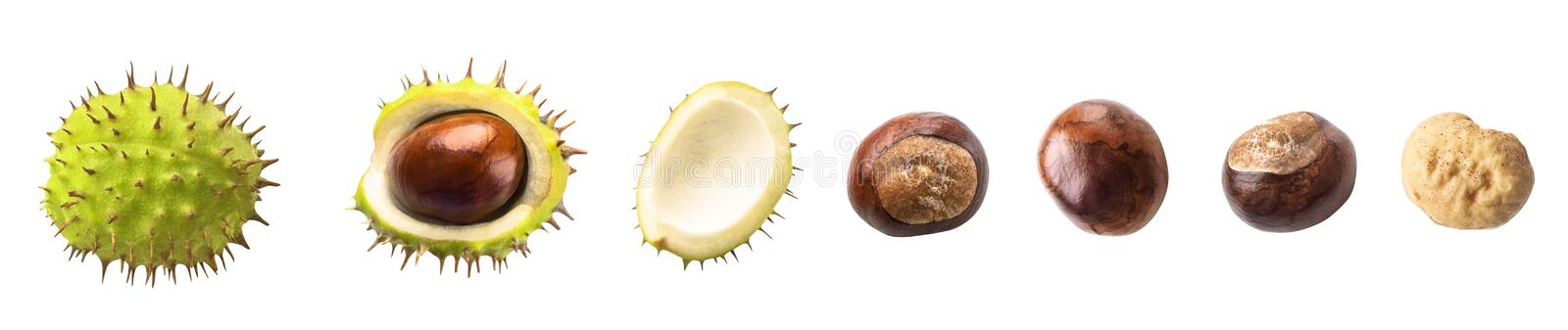 Set of ripe chestnuts isolated on white background. Healthy food royalty free stock photo