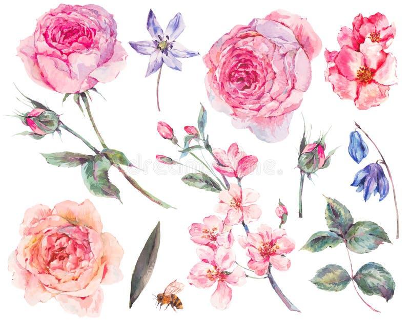Set rocznik akwareli róże opuszcza, kwitnący gałąź ilustracja wektor