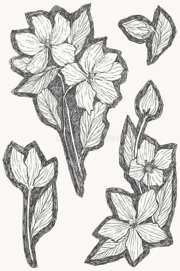Set rocznika botaniczny ilustracyjny kwiat Kwiatu pojęcie Botanica pojęcie 10 tło projekta eps techniki wektor royalty ilustracja