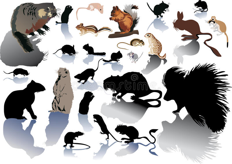 Set rodentson Weiß lizenzfreie abbildung