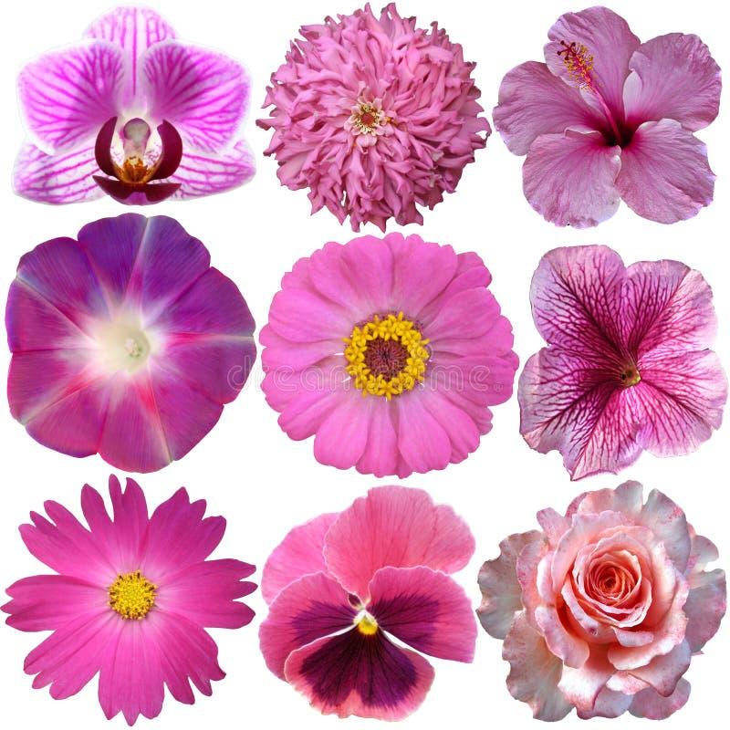 Set rosa Blumen lizenzfreie stockbilder