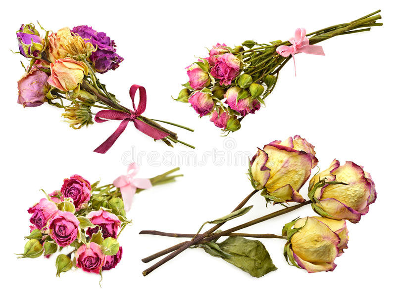 Set of rose bunches stock photography