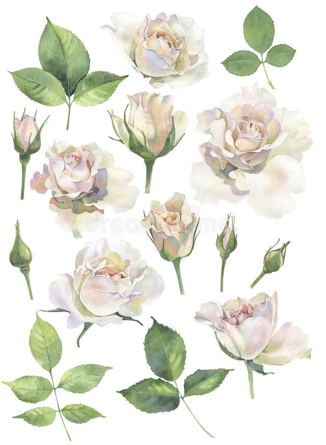 A set of roses for invitations royalty free illustration