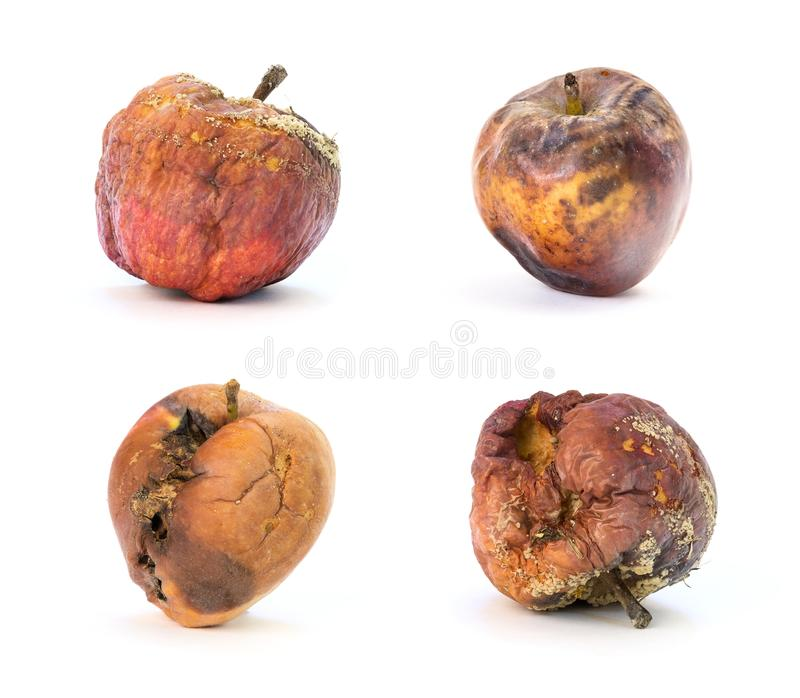 Set of rotten apples royalty free stock photo