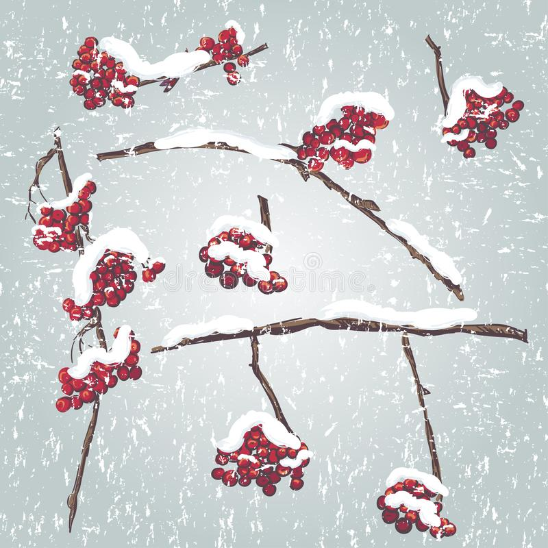 Set of rowan branches with the snow on them. Frozen tree branches, rowan berry, snowfall. Cartoon doodle style royalty free illustration