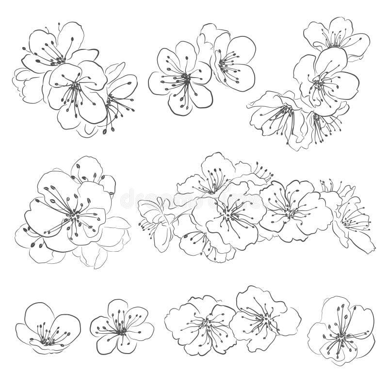 Set rysować czereśniowych okwitnięcia royalty ilustracja