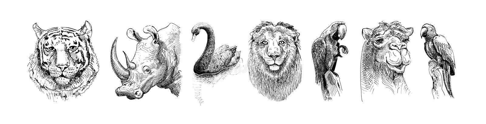 Set of safari head animals, black and white sketch drawing royalty free illustration