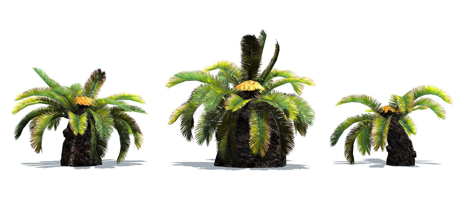 Set of Sago Palm trees with shadow on the floor. Isolated on white background royalty free illustration