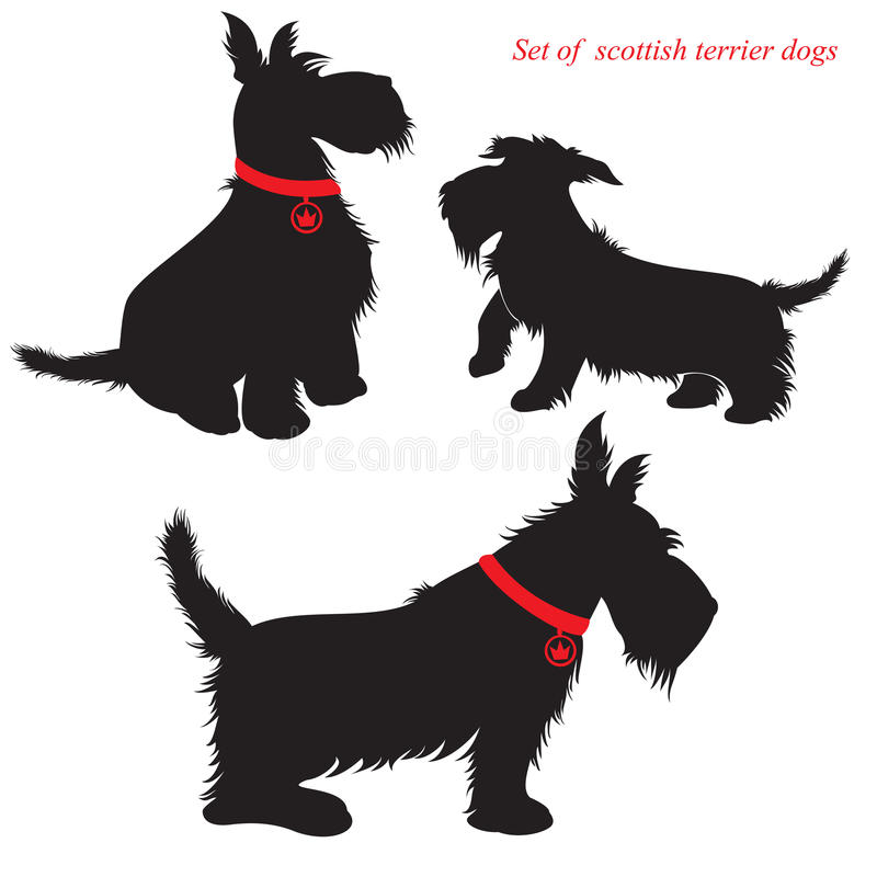 Download Set Of Scottish Terrier Dogs Stock Vector - Image: 28264831