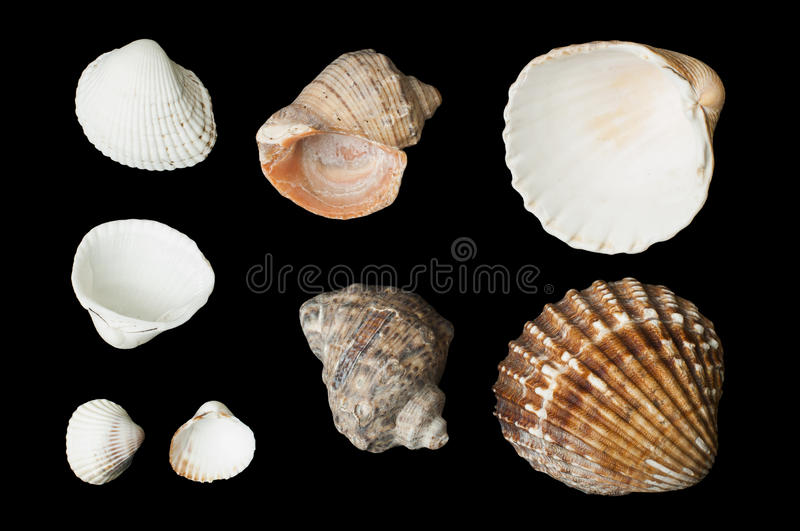 Download Set Of Sea shells Black Isolated Stock Image - Image: 29179095