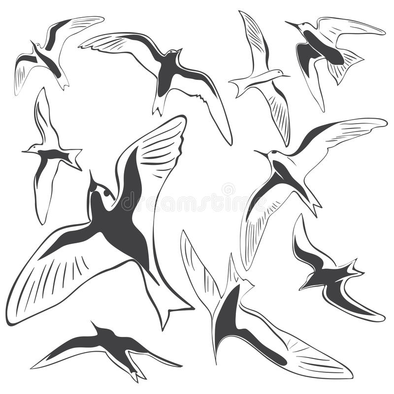 Download Set of Sea Birds stock vector. Illustration of bird, beak - 26124165