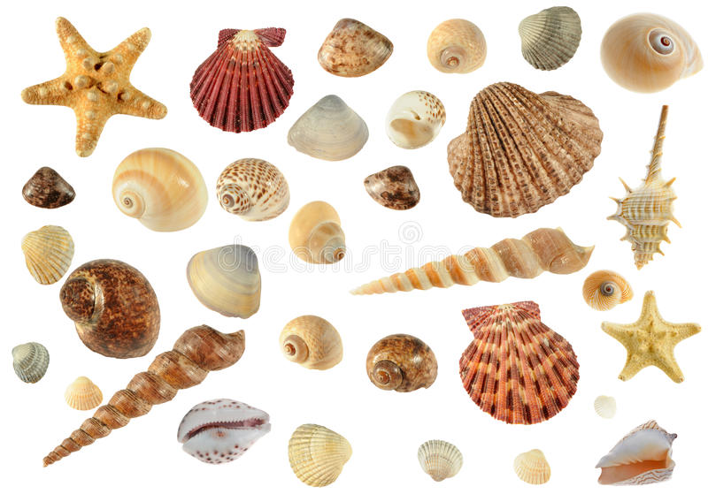 Set of sea cockleshells. Hard light. It is isolated on a white background royalty free stock photography