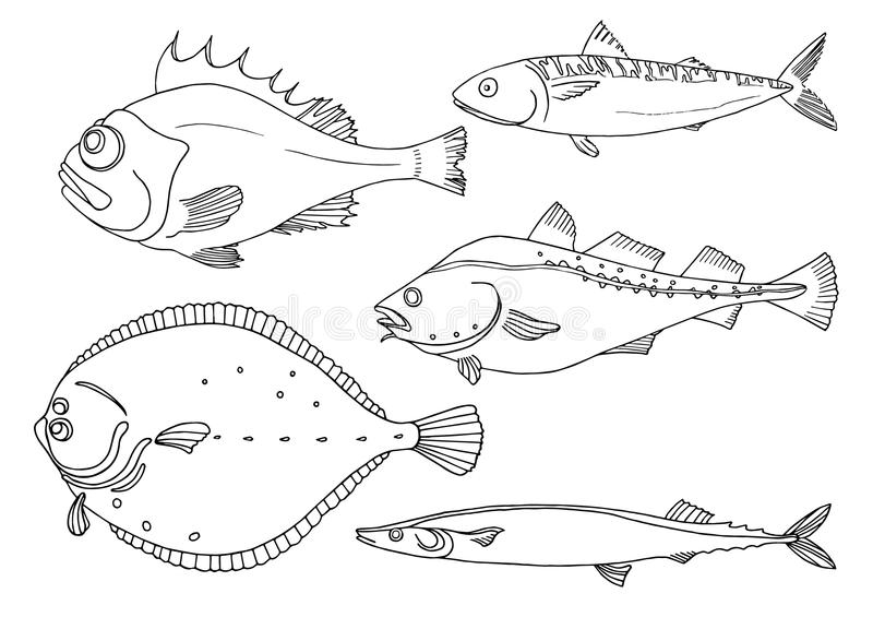 Set of sea fish on white background. Perch, cod, mackerel, flounder, saira. Vector doodle. Illustration isolated and grouped for easy editing vector illustration