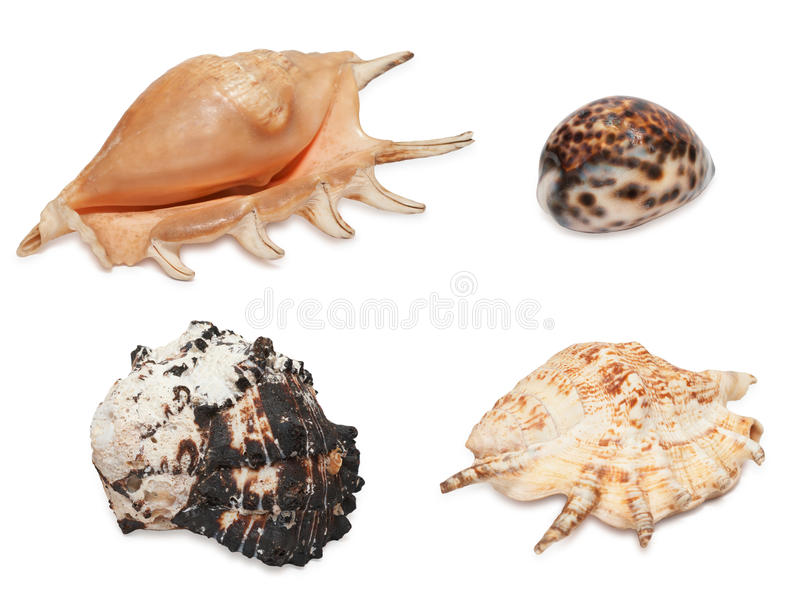 Download Set of sea shells stock image. Image of objects, brown - 14144897