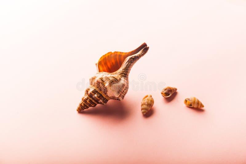 Set of sea shells on orange background. Sea concept royalty free stock photos