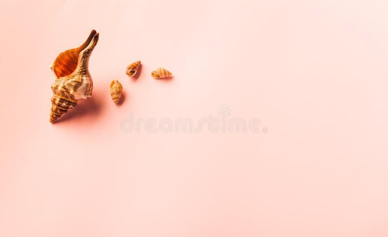 Set of sea shells on orange background. Sea concept stock image