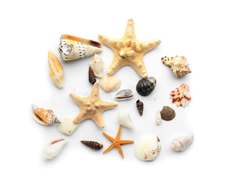 Set of sea shells and starfish on white background stock images