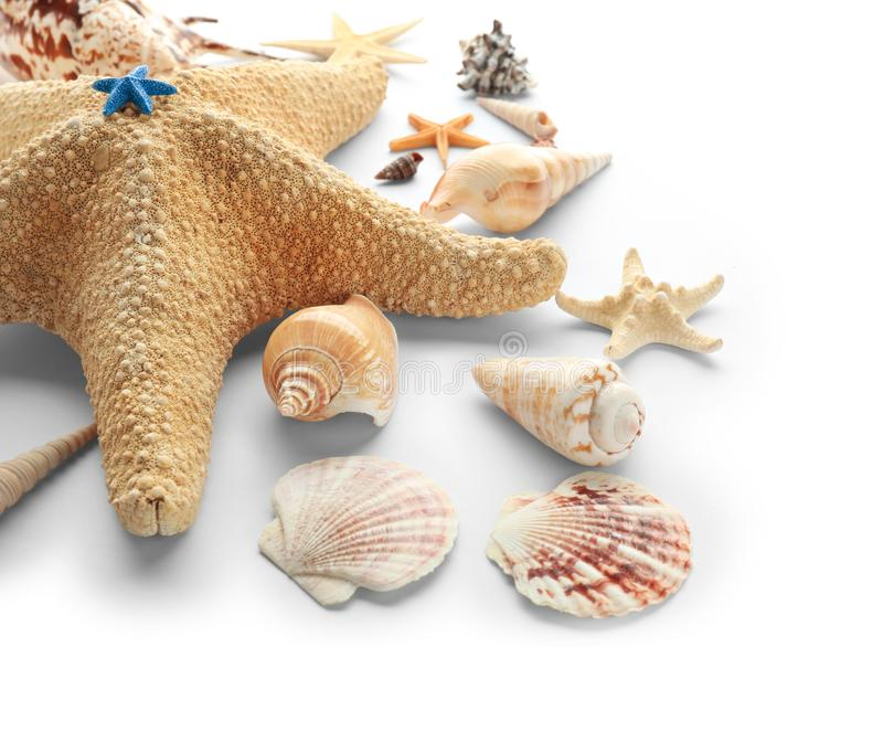 Set of sea shells and starfish on white background royalty free stock photo