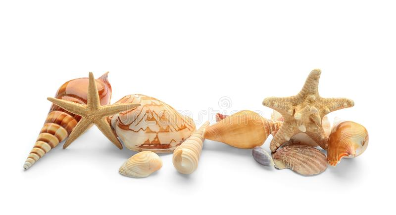 Set of sea shells and starfish on white background stock photography