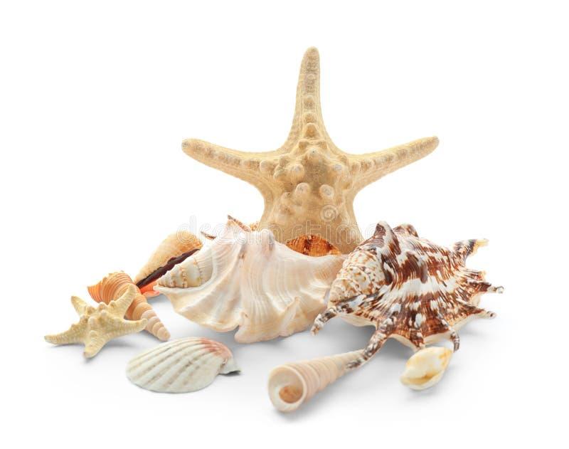 Set of sea shells and starfish on white background stock image