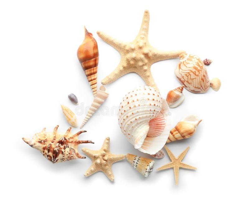 Set of sea shells and starfish on white background stock photos